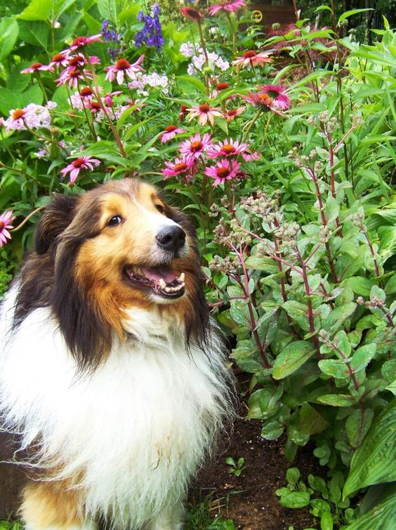 "Your garden can be a pet-friendly, ""peaceable kingdom"" for both pets and people. It just takes a little understanding of the pet's point of view. Learn more on HGTV."