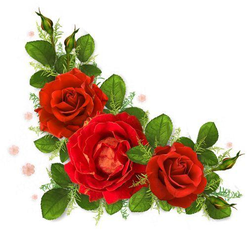 Roses 72 Png Flower Painting Rose Flower Wallpaper Beautiful Flowers Wallpapers