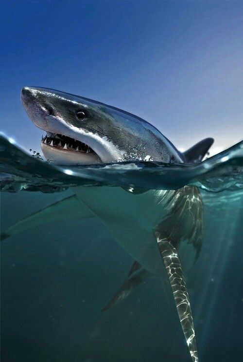 """sharks can sense their prey by a """"sixth sense"""" using electrical current sensors located on their snouts"""