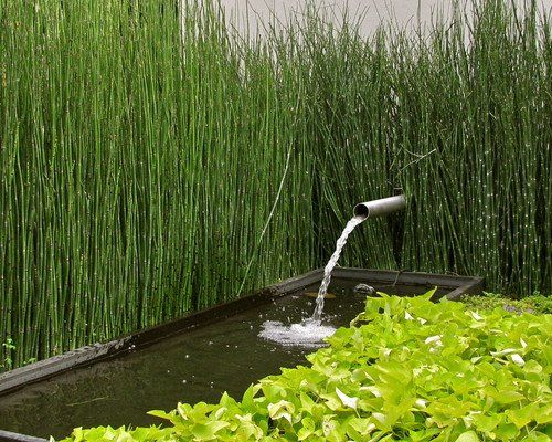 Zen yard with koi equisetum horsetail plants for Design of maturation pond