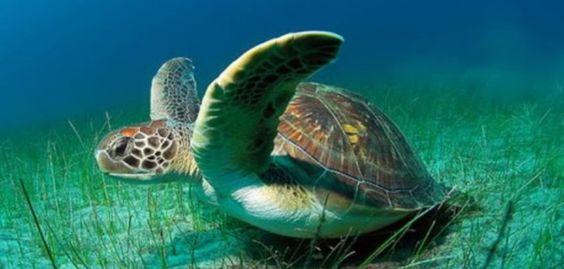 """¡Queremos que viajes a Costa Rica!  Costa Rica hay que verla con nuestros propios ojos. Playas, selva, y volcanes se agolpan en un país cálido y acogedor.  En el Parque Nacional de Tortuguero, podremos contemplar varias especies de tortugas y miles de especies vegetales.  Haz tuyo el dicho local: """"Costa Rica es pura vida"""".  A partir de 1.522€ te llevamos en un circuito Jungla y Playa con salida desde Madrid.  Aquí te informamos de todas las opciones para conocer este paraiso…"""