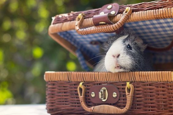 Piggie on a picnic❤️. Who brought the veggies?