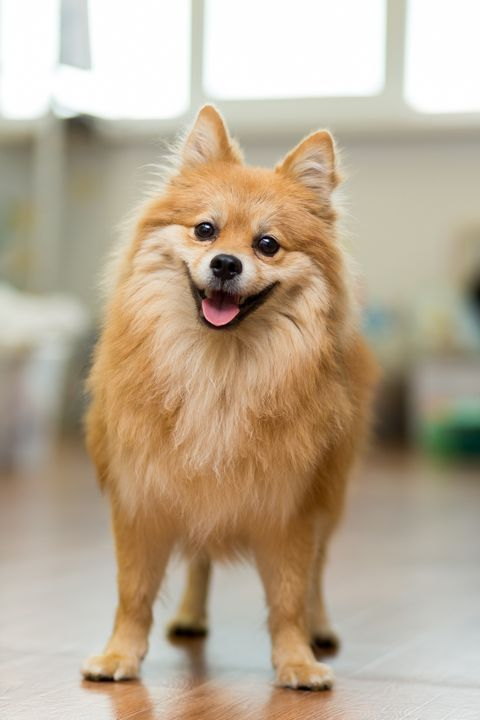 15 Best Apartment Dogs For City Dwellers Apartment Dogs Best