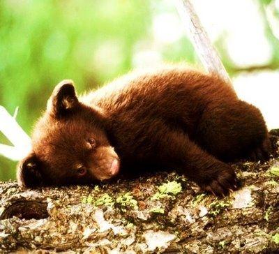 sleep, sleep, sleep