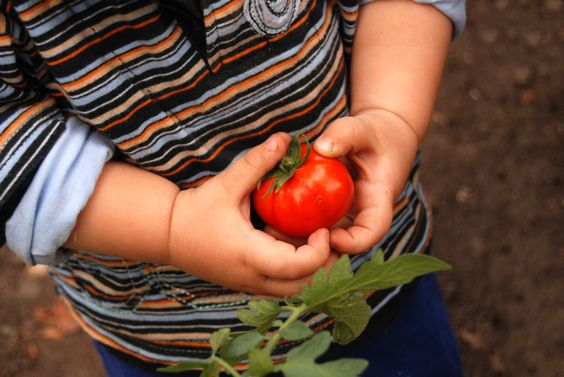 Organic Food for Kids