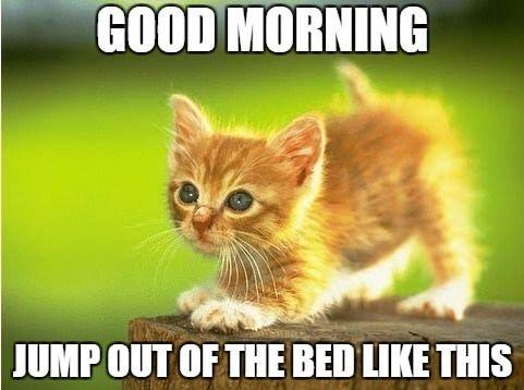 Good Morning Kitten Memes 1 By Jodi Good Morning Cartoon Morning Humor Cute Good Morning
