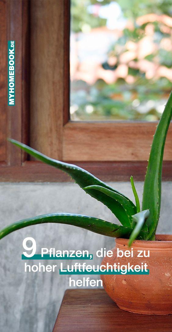 9 Pflanzen Die Die Luftfeuchtigkeit Senken Konnen Pflanzen Luftfeuchtigkeit Wustenpflanzen