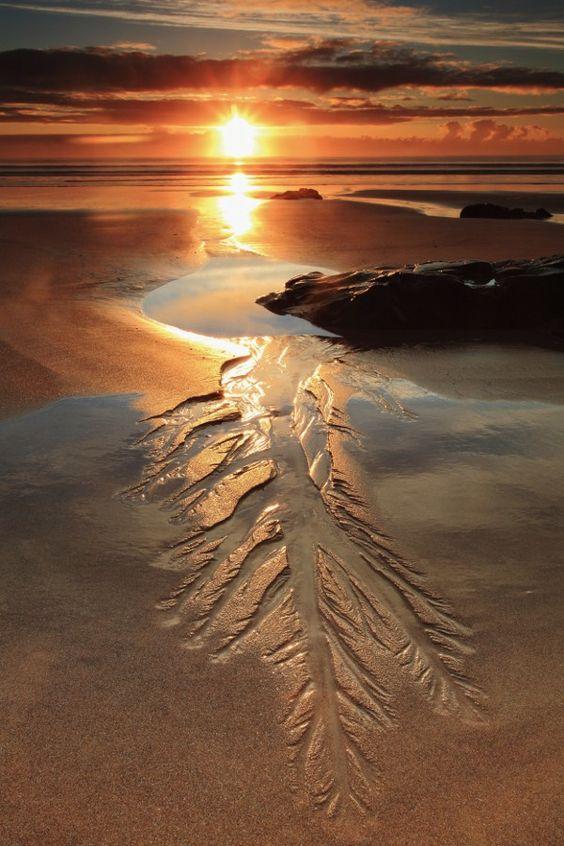 Title: beachfern Artist: murphnut3 ( http://ift.tt/1mwl2oH )
