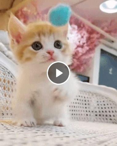 Filhotinho de gato quer brincar.