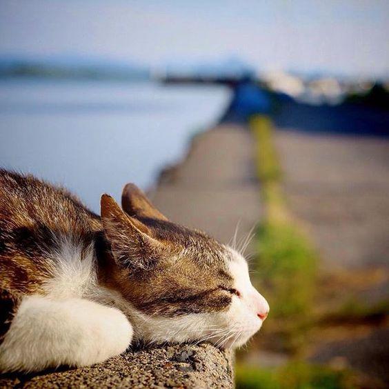 居眠りする野良猫)