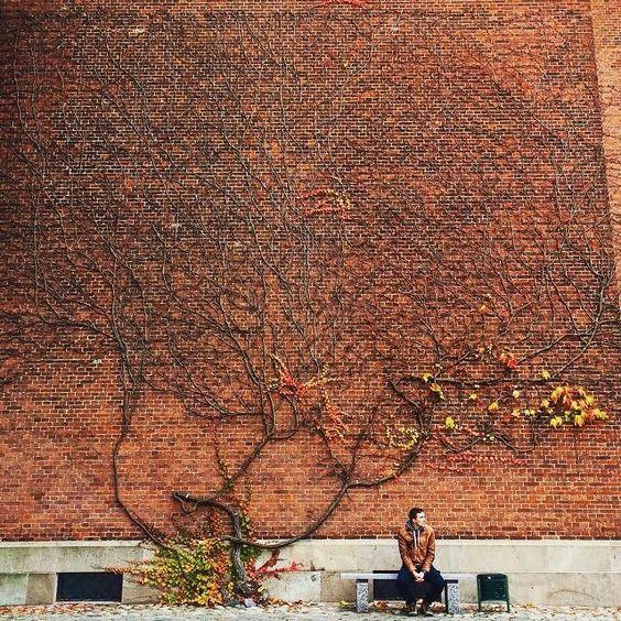 Inspiration time (via @tikhonova.genia ) #parfara #inspirationtime #inspiration #autumn