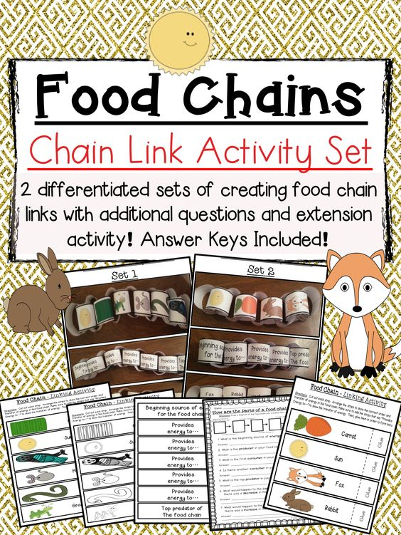 activities food chains and paper chains on pinterest. Black Bedroom Furniture Sets. Home Design Ideas
