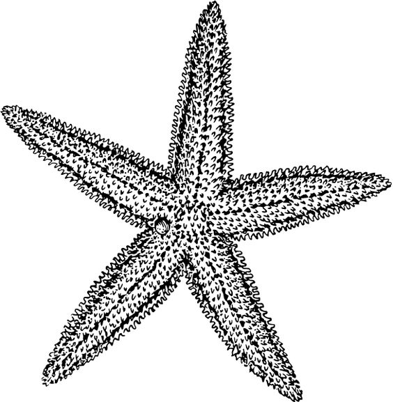 Clip Art Starfish Clip Art free starfish clipart picture 4 of baby shower 4