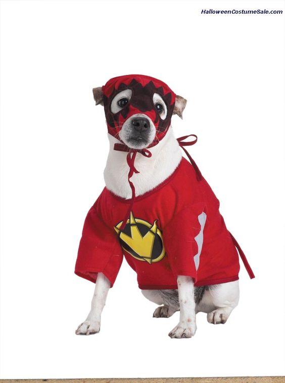 T Rex Power Ranger Pet Costume Petcostumes Animalplanet Petcostume Dogcostume Pet Costumes Small Dog Costumes Dog Halloween Costumes Diy