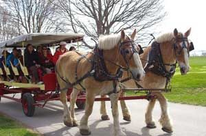 World's largest horse and buggy livery. Come take a one hour and 45 minute narrated historic and scenic horse carriage tour through the island.