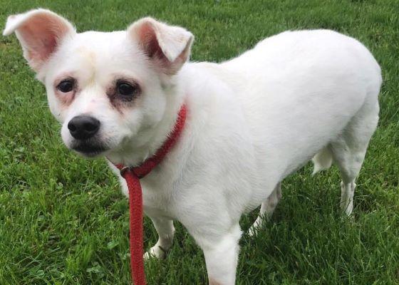 For Adoption Savemedogrescue Cat Illnesses Dog Adoption Animals
