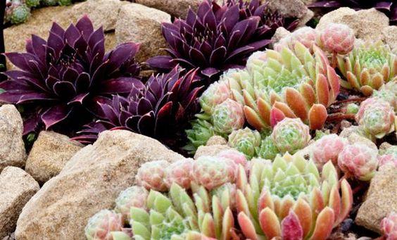 Create an Ornamental Rock Garden