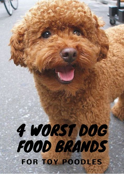4 Dog Food Brands To Avoid Dog Food Brands Dog Food Recipes Poodle