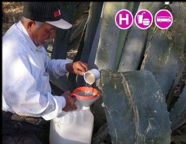Tour al Santuario de Luciérnagas y Ruta del Pulque. ¡Una aventura extraordinaria en los bosques de Tlaxcala! Incluye: Transporte redondo + Alimentos + Hospedaje. / Ve los detalles completos aquí: