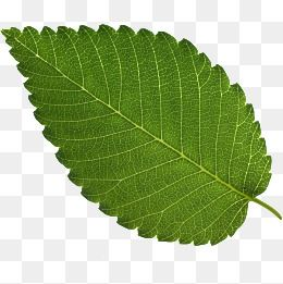 Leaves Of Trees Leaf Texture Red Leaves Green Leaves Png Transparent Clipart Image And Psd File For Free Download Leaf Texture Red Leaves Green Leaves