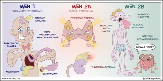 Multiple endocrine neoplasia (MEN) syndromes are inherited autosomal dominant disorders characterized by the growth of benign or malignant tumors involving several endocrine glands . ...