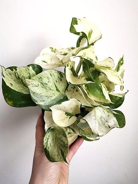 Leaf Happy