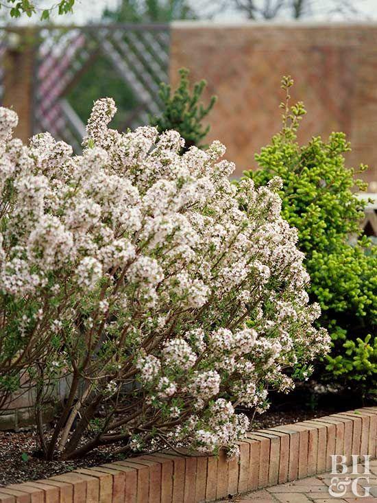 4e4ae344a6dafeb4d50161bb921b5007 - Winter Flowering Shrubs For Small Gardens