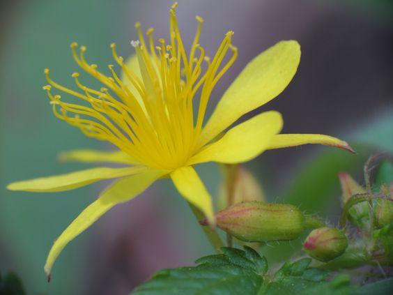 Vegetação silvestre com flor