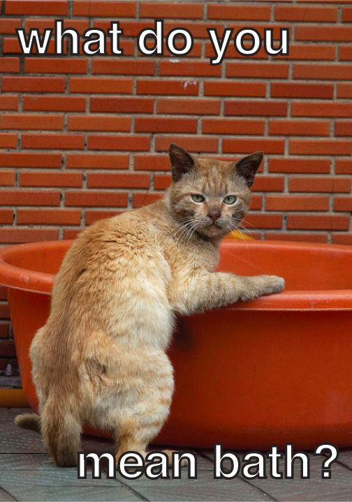 How To Give A Cat A Bath Article From Dr Jeff And Prosense Cats Silly Animals Pets