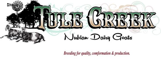 Tule Creek Nubian Dairy Goats Located In The Texas Panhandle Home