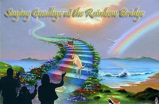 Image result for rainbow bridge poem golden retriever
