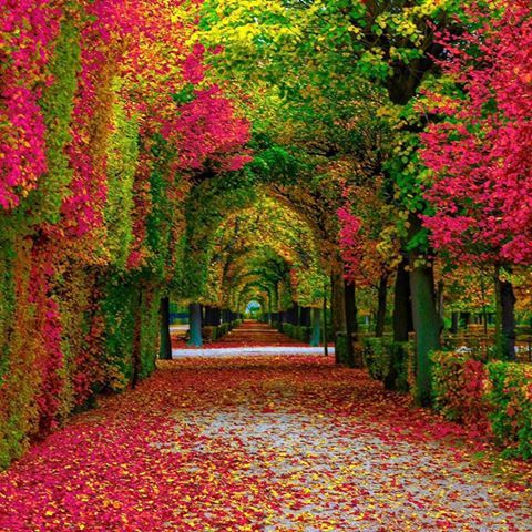 Schonbrunn Palace Vienna Austria Can 39 T Wait To Visit The Palace And Gardens Where Empress