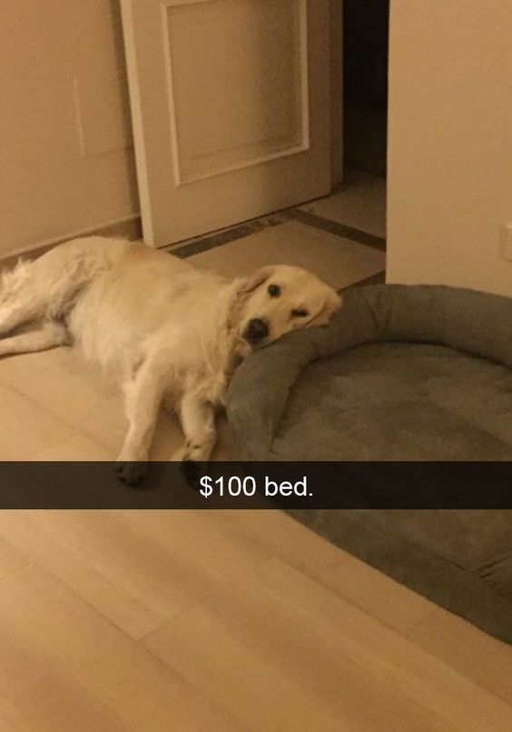 Dog Sleeping Outside Its Bed Funny Dog Pictures Dog Snapchats