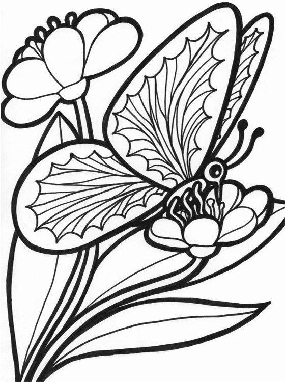 Butterfly Free Coloring Pages Luxury Kids Page Butterfly Coloring Pages In 2020 Butterfly Coloring Page Printable Flower Coloring Pages Free Coloring Pictures