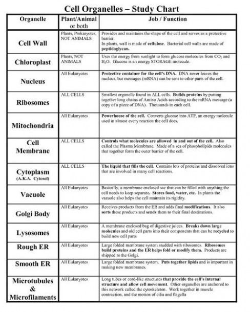 Cells And Their Organelles Worksheet Science Cells Cell Parts Cell Organelles