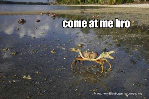 Seven Come At Me Bro Ocean Animals: Funny Biz, Giggle, Animals Crabs, Funny Stuff, Crabby Cancer, Funny Shiet, Ocean Animals