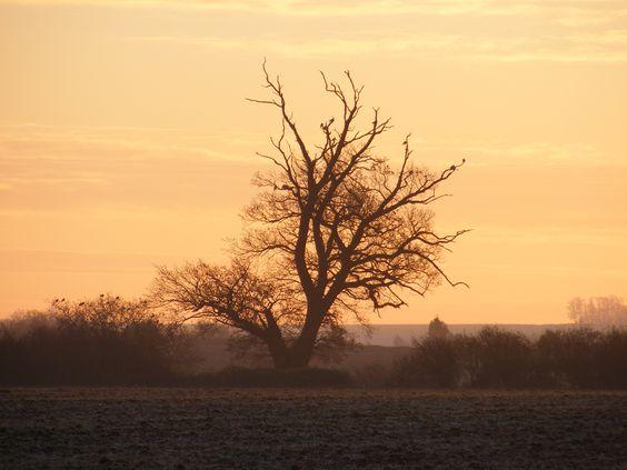 December dawn - tree and birds