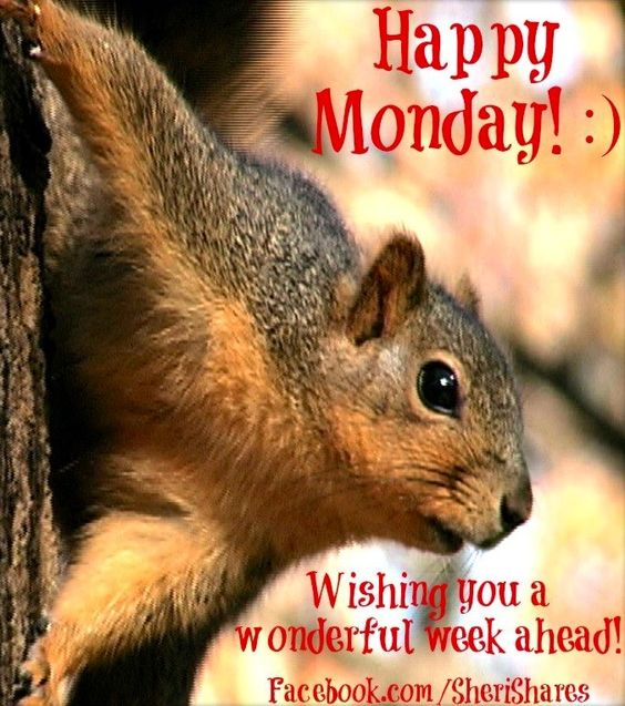 Happy Monday! via www.Facebook.com/SheriShares