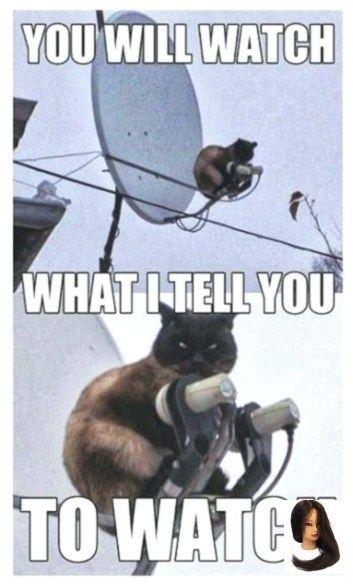 Animal Meme Clean Animals Clean Funny Ideas Memes Funny Animals Memes Clean 58 Ideas For 2019 Funny Funny Animal Memes Funny Animal Jokes Funny Cat Memes