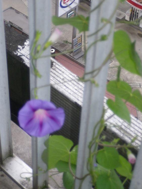 fleur bleue je suis