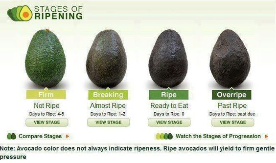 Stages of the avocado
