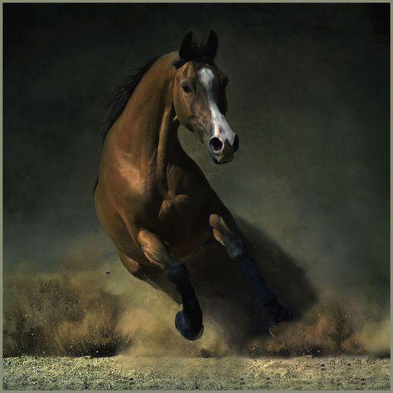 Beautiful Horses-2