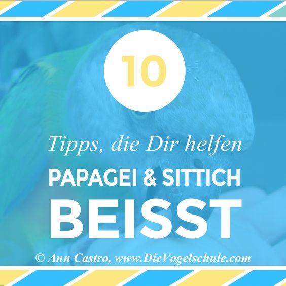 Artikel über die 10 besten Tipps bei beißenden & aggressiven Papageien & Sittichen