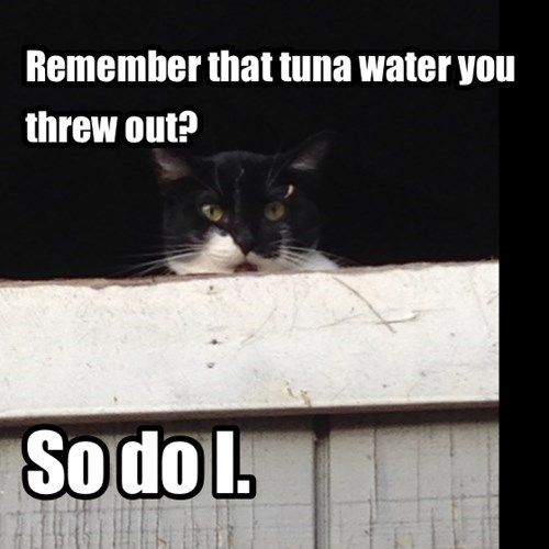 Remember that tuna water you threw out? So do I