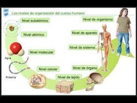 Nivel De Organización De Los Seres Vivos Organizacion De La Materia Biología Cuadernos Interactivos De Ciencias