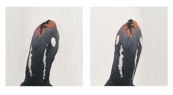 Roni Horn, Bird