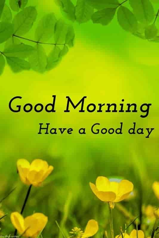Good Morning Have A Good Day With Beautiful Nature Good Morning Beautiful Images Lovely Good Morning Images Good Morning Nature