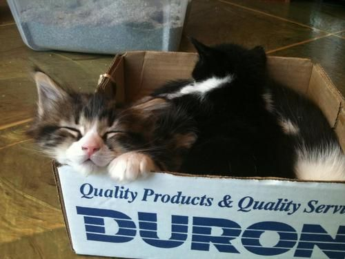 If only Duron had an ad contest….