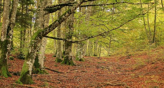 Spain - Selva de Irati, Navarra