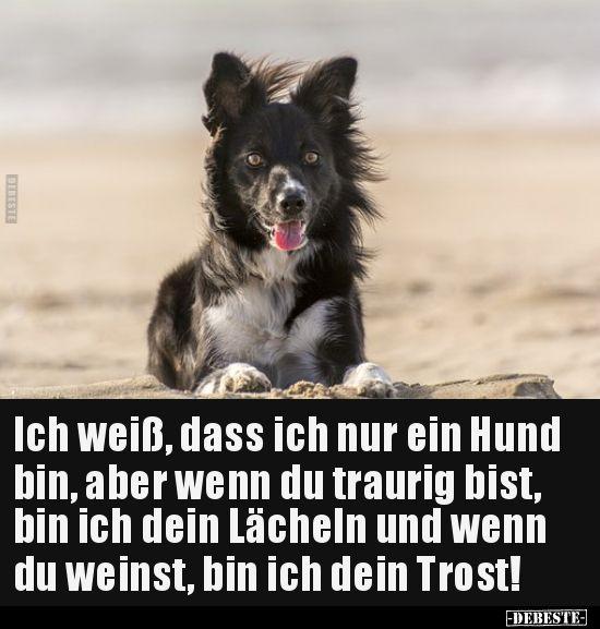 Ich Weiss Dass Ich Nur Ein Hund Bin Aber Wenn Du Traurig Lustige Bilder Spruche Witze Echt Lustig Hunde Spruche Tierliebe Traurig